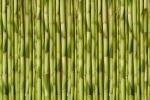 BAMBOO GREEN VERT fusion wall panel