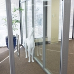 Frameless swing glass door with barpulls