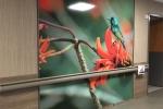 Fusion Custom - LuxCore - Healthcare Photo Installation